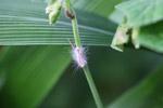 Hairy white caterpillar