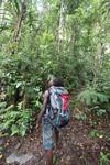 West Papua birding guide
