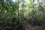West Papua birding guide [west-papua_5828]
