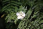 Fallen white rainforest flower