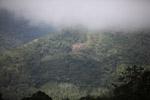 Smallholder swidden agriculture in the Arfak mountains