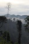 Arfak forest [west-papua_6033]