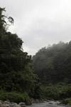 Arfak forest [west-papua_6047]
