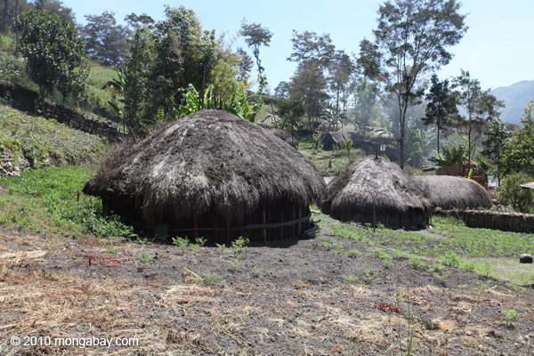 Dani village in the New Guinea highlands