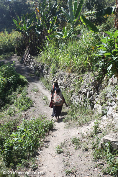 Papuan woman carrying sweet potatoes in the typical fashion: in a bag hanging from the top of her head