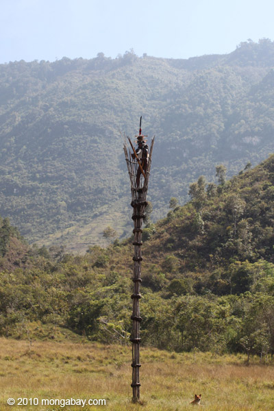 Dani elder in traditional dress atop a watch tower [papua_5365]