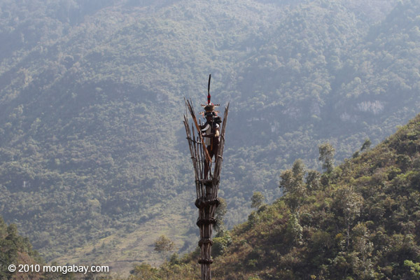 Dani elder in traditional dress atop a watch tower [papua_5368]