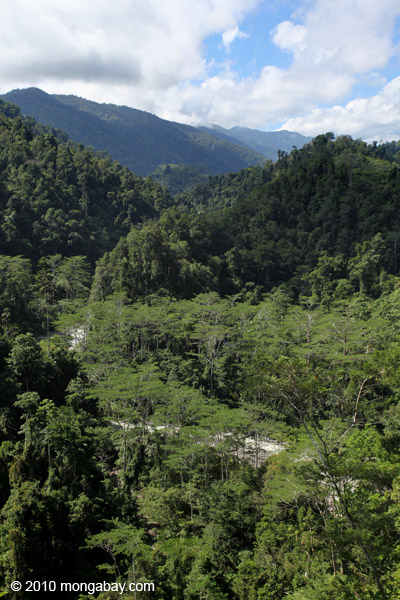 River valley in the Arfak mountains, West Papua