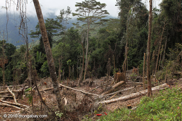 Deforestation in the Arfak mountains [west-papua_0576]