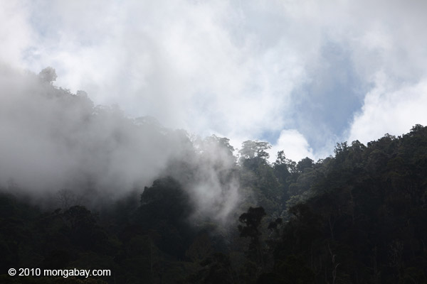 Cloud forest in New Guinea