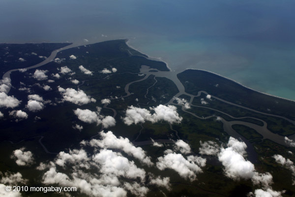 Aerial view of jungle and delta in Indonesian Papua. Photo by: Rhett A. Butler.
