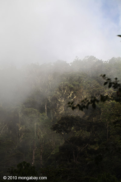 Fog over the West Papua rainforest
