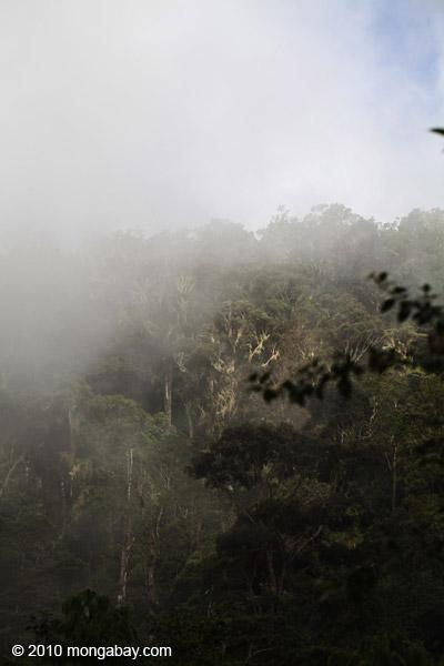 Fog over the West Papua rainforest