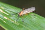 Orange insect [manu_0045]