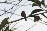 Bird [manu_0114]