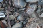 Miniscule frog