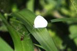 Butterfly [manu_0868]