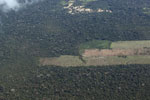 Deforestation for cattle pasture in the Peruvian Amazon