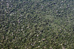 Aerial photograph of Amazon broccoli forest