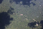Isolated patch of deforestation in the Amazon