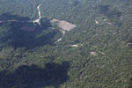Clear-cutting in the Amazon