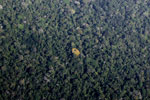 Looking down from an airplane at the forest of the Amazon basin
