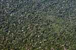 Looking down at Amazon basin rain forest