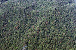 Overhead view of forest in the Amazon basin