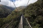 Manu canopy walkway