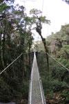 Manu canopy walkway [wayquecha-andes_0282]