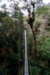 Manu canopy walkway [wayquecha-andes_0311]