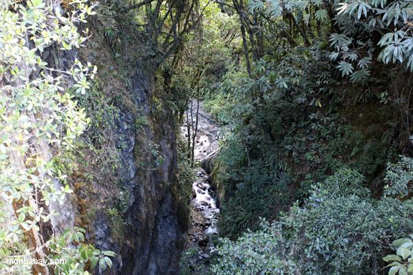 Rainforest stream in Manu
