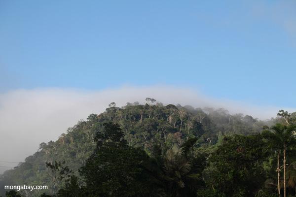 Amazon rainforest profile