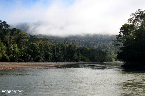 Rio Pini Pini flowing out of Manu National Park. Photo by: Rhett A. Butler.