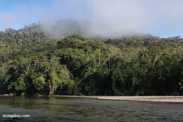 Pini Pini River in Manu National Park. Photo by: Rhett A. Butler.