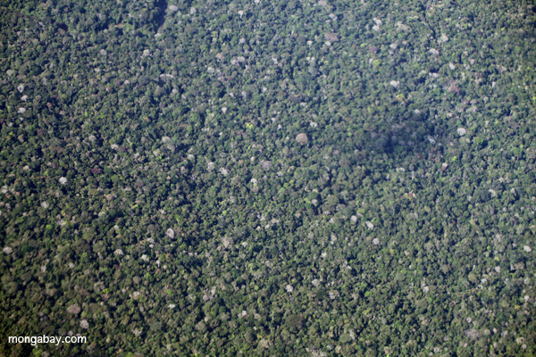 Overhead view of the Amazon rainforest