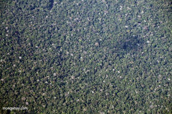 Overhead view of the Amazon rainforest
