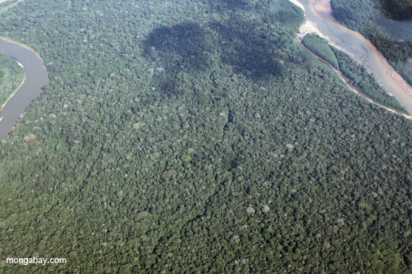 Aerial view of an Amazon rainforest creek obscured by the canopy in the Peruvian Amazon