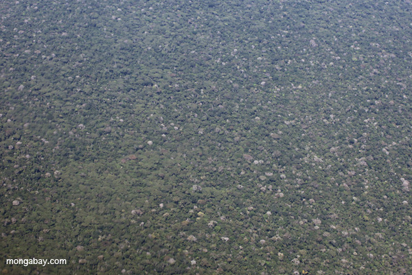 Broccoli-like rainforest in the Amazon