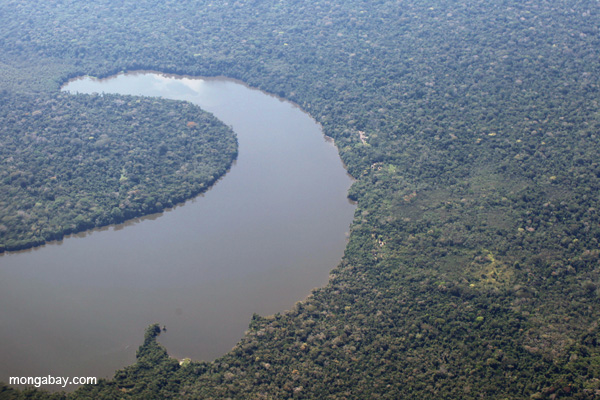 Aerial view of Sandoval Lake in Peru, home to a well-known family of giant river otters. Photo by: Rhett A. Butler.