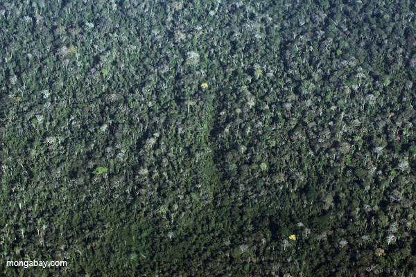 Airplane view of the rainforest canopy in the Ucayali department of the Peruvian Amazon