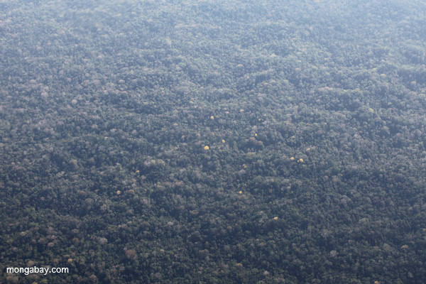 Overhead view of the rainforest canopy in Peru's Ucayali department