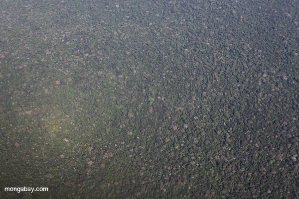 Aerial view of Peru's Amazon rainforest