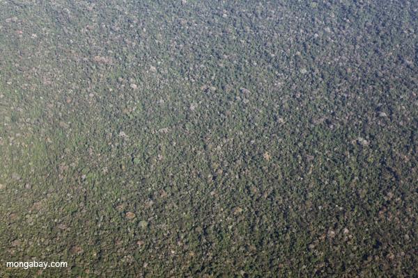 Aerial photo of Peru's Amazon rainforest