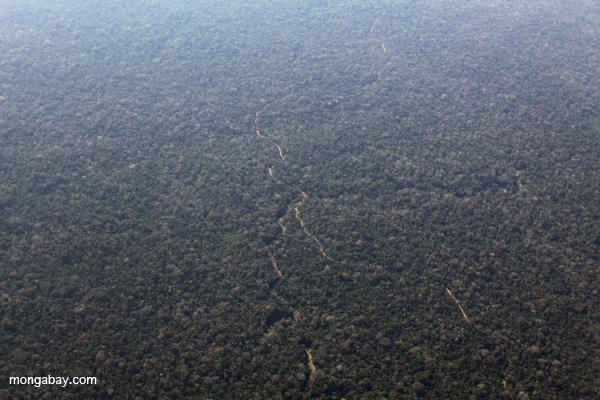 Logging road in Peru