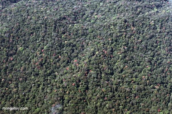 Highly biodiverse submontane forest of the Amazon basin