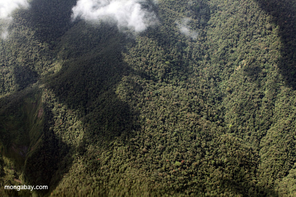 Cloud forest in the Amazon basin