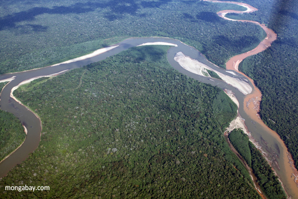 The Importance of the Amazon Rainforest