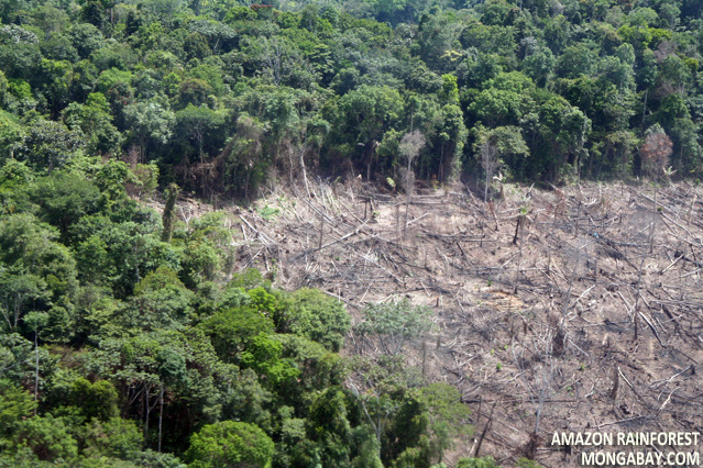 the great importance of the tropical rainforests and the effects of their destruction