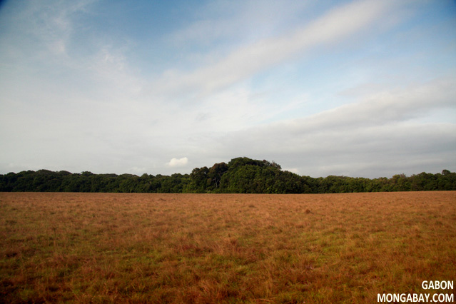 Forest and savanna in Gabon